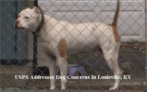 USPS launches mail campaign to raise awareness about dog attacks in Louisville